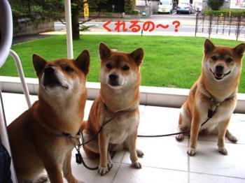 3_20090708210501.jpg