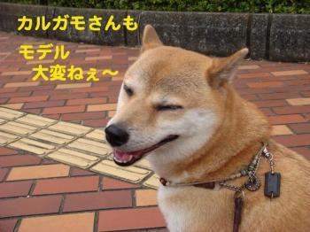 3_20090809214036.jpg