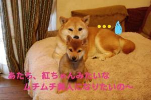 4_20081217202541.jpg