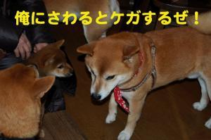 4_20081219010001.jpg