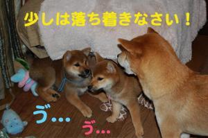 4_20081220024709.jpg