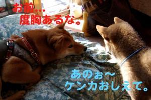 4_20081220180609.jpg