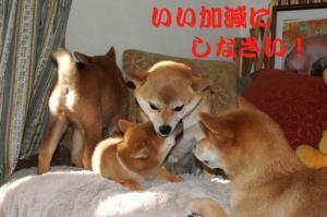 4_20090110223811.jpg