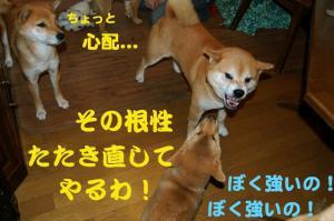 4_20090118190853.jpg