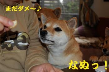 4_20090124214132.jpg