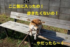 4_20090127203822.jpg