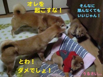 4_20090208022321.jpg