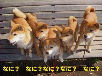 4_20090213004258.jpg