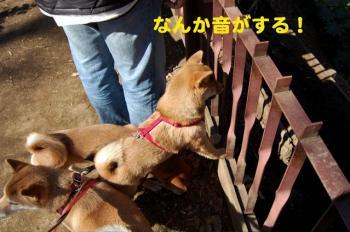 4_20090218170136.jpg