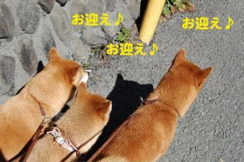4_20090308001830.jpg