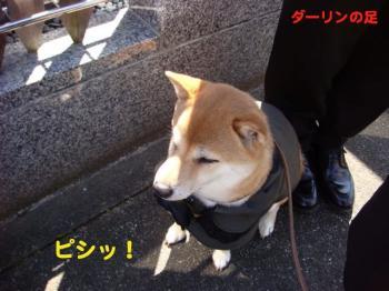 4_20090315224102.jpg