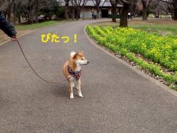 4_20090329164937.jpg