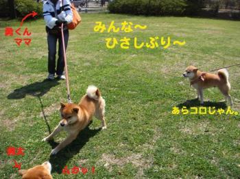 4_20090404213832.jpg
