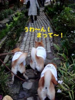 4_20090430191209.jpg