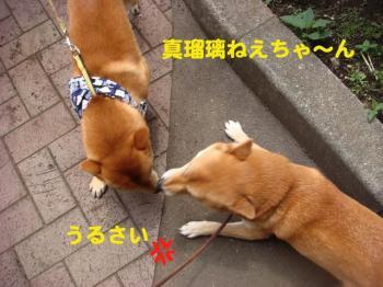 4_20090511212926.jpg