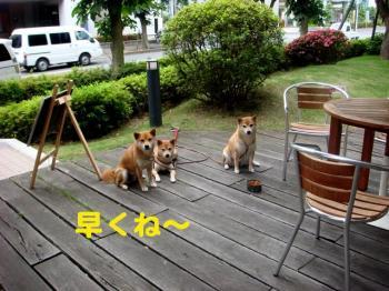 4_20090604221725.jpg