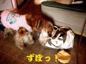 4_20090607203357.jpg