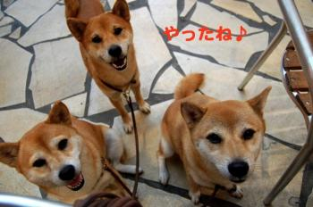 4_20090812192251.jpg