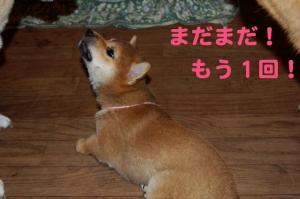 5_20081220023833.jpg