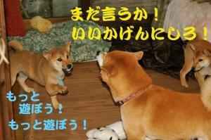 5_20090118191026.jpg