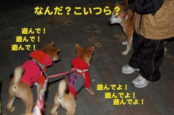 5_20090127205903.jpg