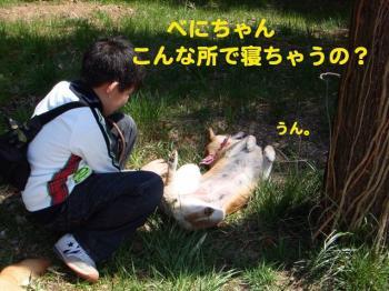 5_20090405221227.jpg