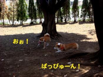5_20090409213211.jpg