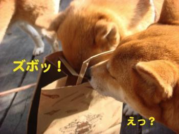 5_20090420080654.jpg