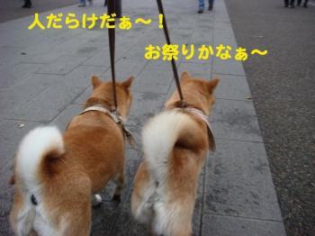 5_20090422104443.jpg