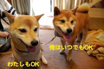 5_20090526213922.jpg