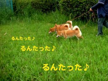 5_20090608230151.jpg