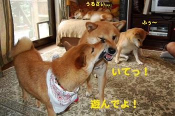 5_20090821215214.jpg
