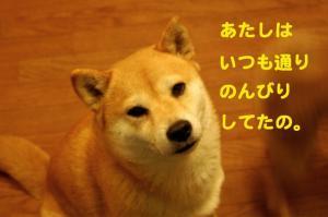6_20090108022408.jpg