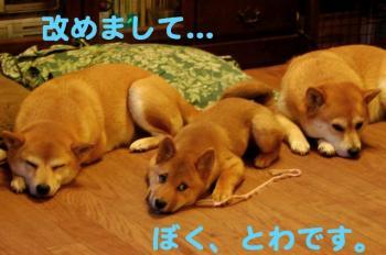 6_20090126004856.jpg