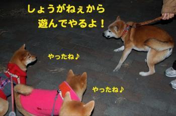 6_20090127210059.jpg