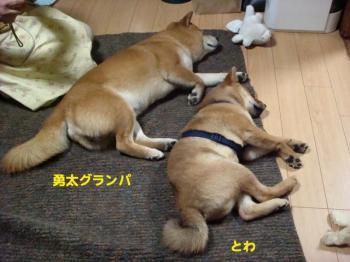 6_20090208021731.jpg