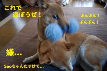 6_20090216182536.jpg