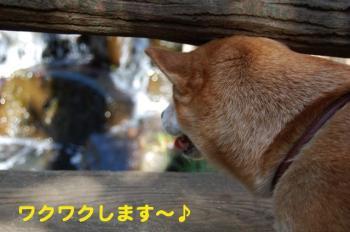 6_20090218170325.jpg