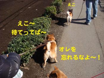 6_20090222014743.jpg