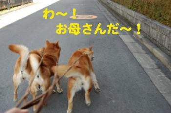 6_20090308002059.jpg