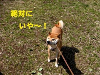 6_20090317011035.jpg