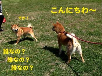 6_20090404215039.jpg