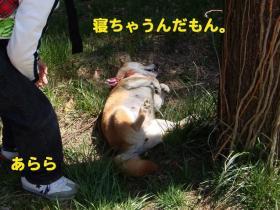 6_20090405221305.jpg
