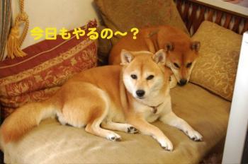 6_20090917001456.jpg