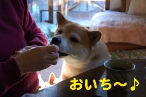 7_20081228003741.jpg