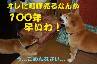 7_20090118191332.jpg