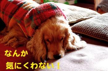 7_20090129030122.jpg