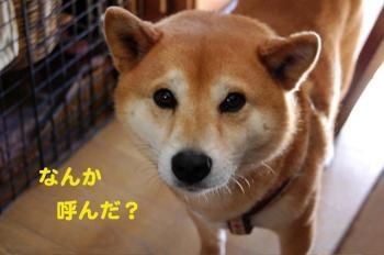7_20090202015413.jpg