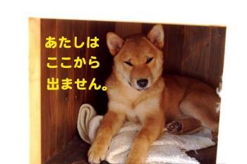 7_20090210233804.jpg