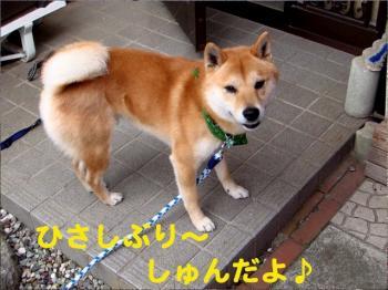 7_20090211220422.jpg